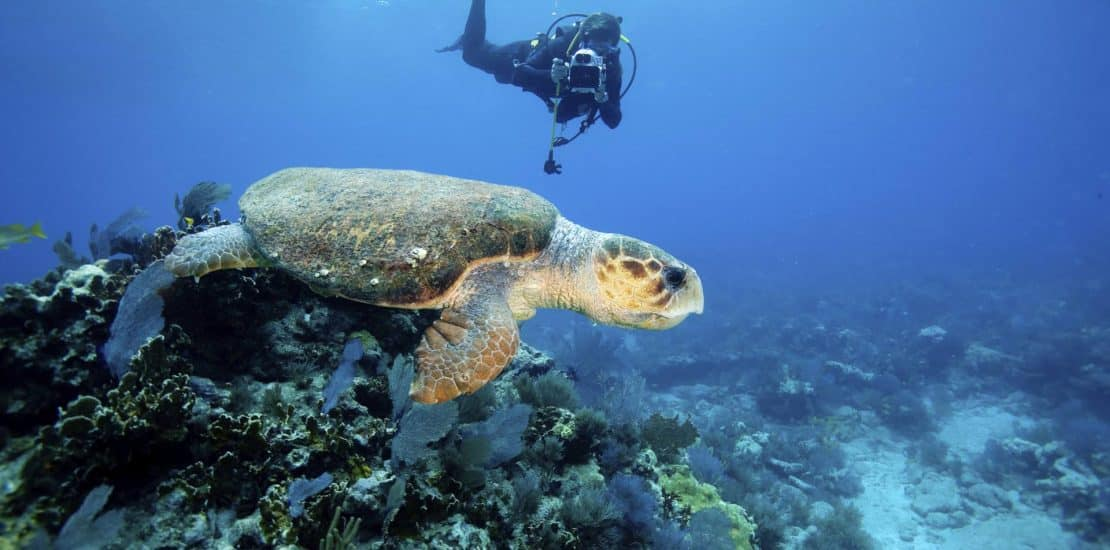 Getting Started with Digital Underwater Photography 2021