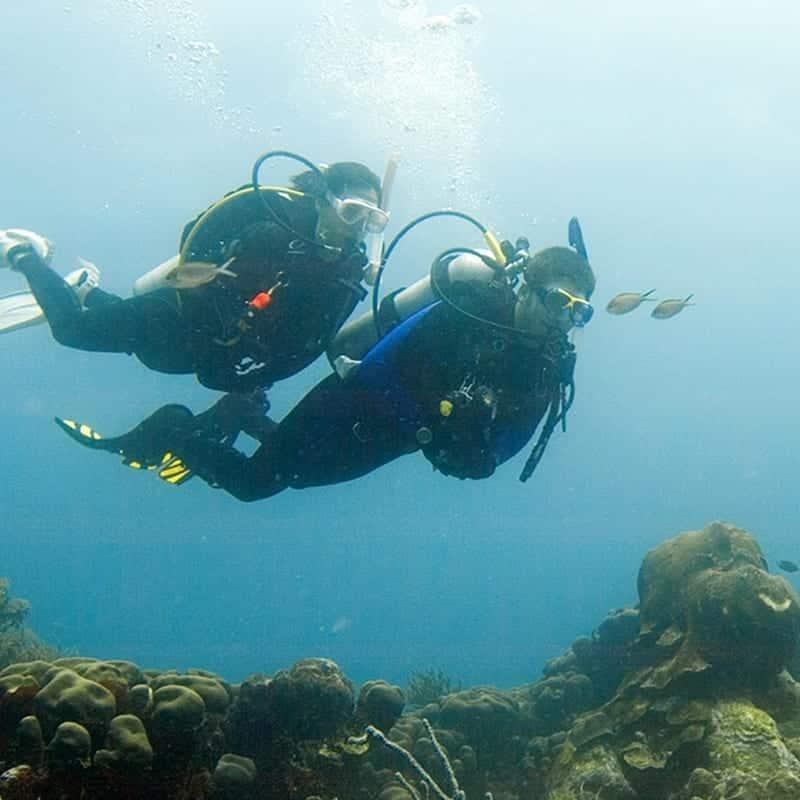 Deep Diver 2021