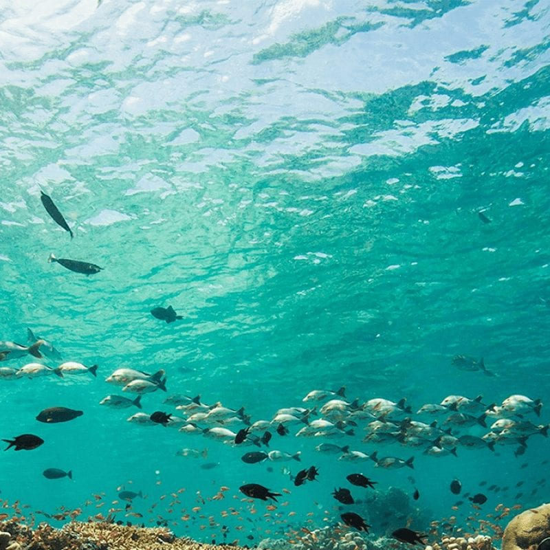 AWARE Fish Identification 2021