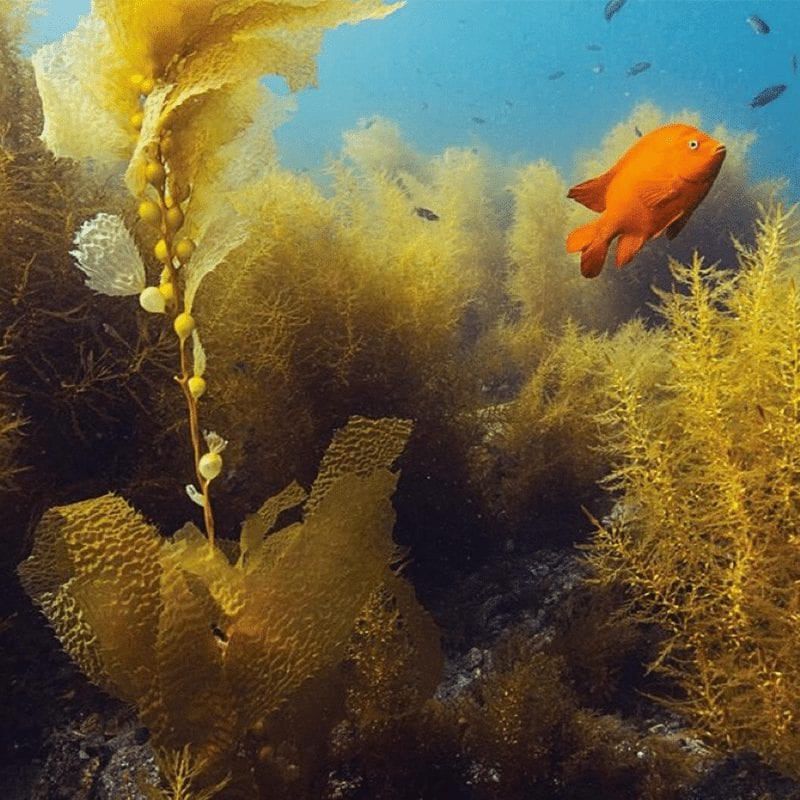 Underwater Naturalist 2021